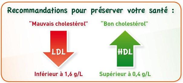 La phytothérapie pour diminuer le cholestérol et les triglycérides