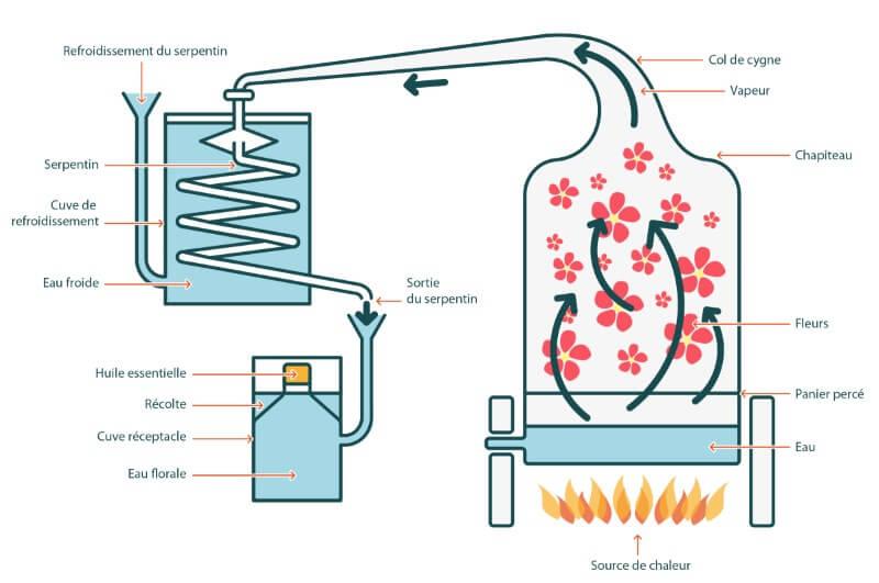 La distillation de la plante aromatique: de l'essence à l'huile essentielle