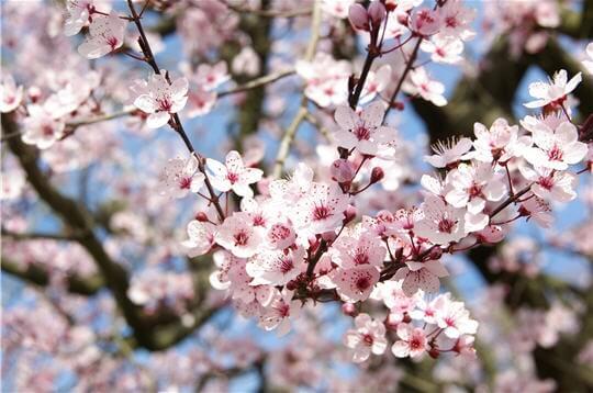 La cure de printemps devra drainer et nettoyer le sang pour que l'énergie circule