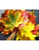 Cure d'automne: une prévention bienfaisante