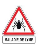 maladie de Lyme 6ème période