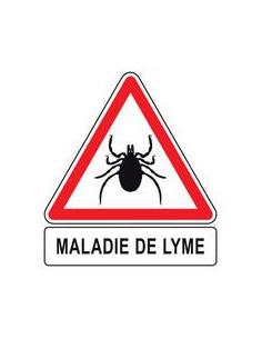 maladie de Lyme période 1 à 3